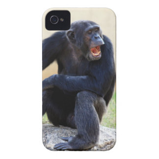 Shouting Chimp iPhone 4 Cover