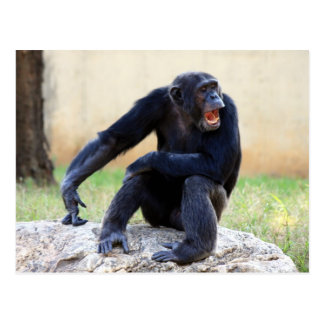 Shouting Chimp Postcard