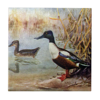 Shoveler Ducks Vintage Illustration Tiles