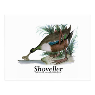 Shoveller duck, tony fernandes postcard