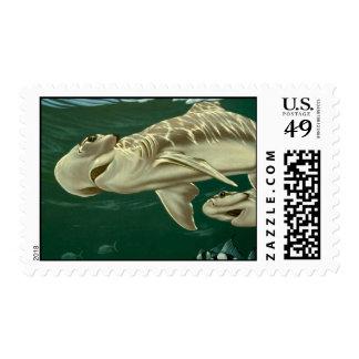 Shovelnose, Florida Bay Stamp