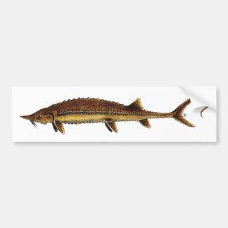 Shovelnose Sturgeon - Scaphirhynchus platorynchus Car Bumper Sticker