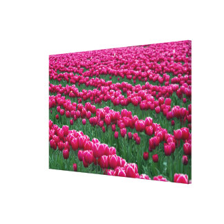 Show garden of spring-flowering tulip bulbs in canvas print