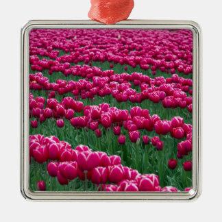 Show garden of spring-flowering tulip bulbs in metal ornament