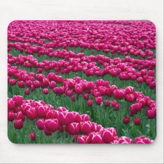 Show garden of spring-flowering tulip bulbs in mouse pad
