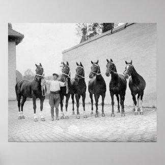 Show Horses, 1912. Vintage Photo Poster