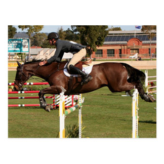 Show jumping horse and rider 2 postcard