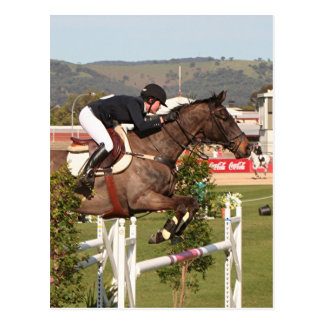 Show jumping horse and rider postcard