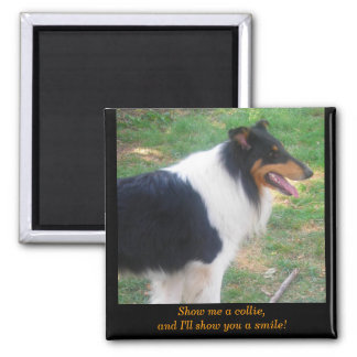 Show me a collie... 2 inch square magnet