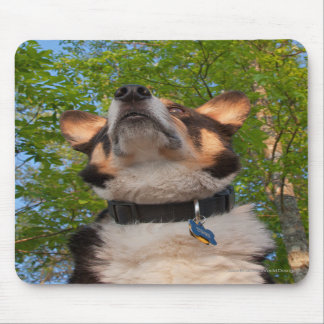 Show Me Intrigue Mouse Pad