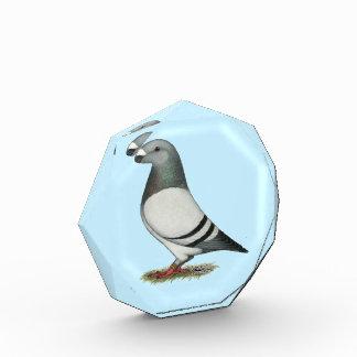 Show Racer Blue Bar Pigeon Award