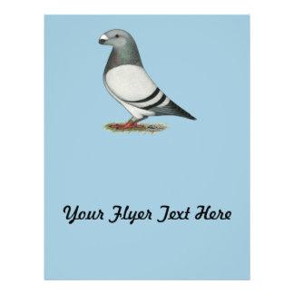 Show Racer Blue Bar Pigeon Flyer