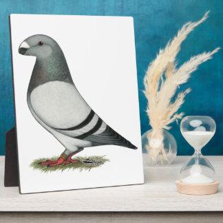Show Racer Blue Bar Pigeon Plaque