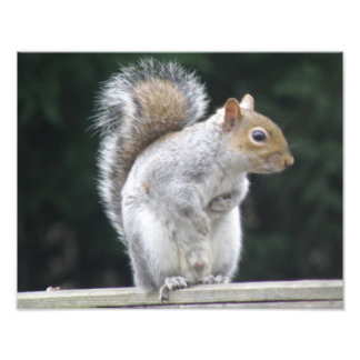 Show your best side Squirrel Photo Print