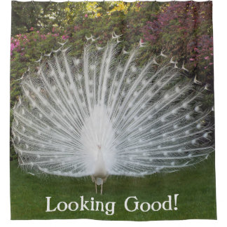 SHOWER CURTAIN/WHITE PEACOCK/LOOKING GOOD! SHOWER CURTAIN