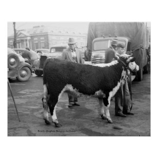 Showing Cattle on the Courthouse Square Print