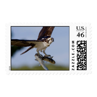 Showing Off Postage Stamp