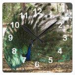 Showoff del pavo real reloj de pared