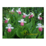 Showy Lady's Slippers Post Card