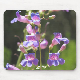 Showy Penstemon Mouse Pad