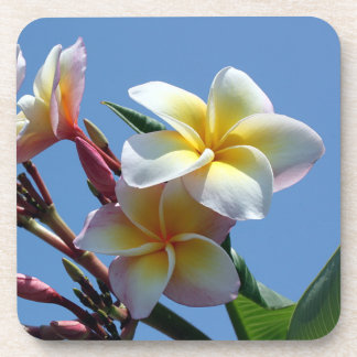 Showy Plumeria Frangipani Blooms Beverage Coaster