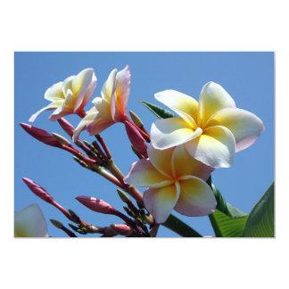 Showy Plumeria Frangipani Blooms Card