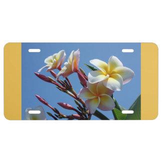 Showy Plumeria Frangipani Blooms License Plate