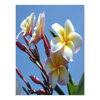 Showy Plumeria Frangipani Blooms Magnetic Card