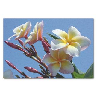 Showy Plumeria Frangipani Blooms Tissue Paper