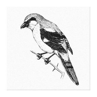 Shrike Bird Bold Line Art Stretched Canvas Prints