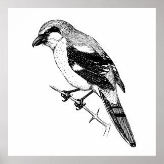 Shrike Bird Bold Line Art Poster