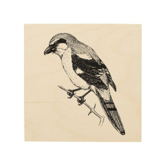 Shrike Bird Bold Line Art Wood Print