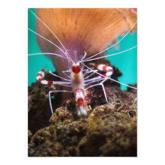 Shrimp Climbing An Anemone Card
