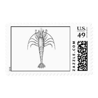 Shrimp Drawing Postage Stamp