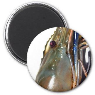 shrimp magnet