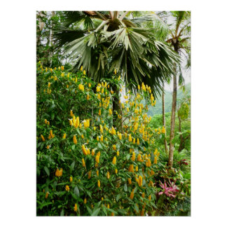 Shrimp plant and Palm Poster