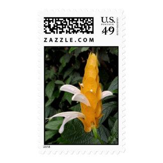 Shrimp Plant Stamps