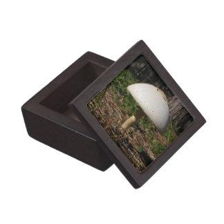 Shroom 0659 Premium Gift Box