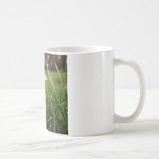Shroom Coffee Mug