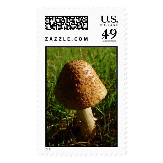 Shroom Stamp