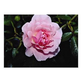 Shrub Rose Golden Wings White flowers Custom Invitation