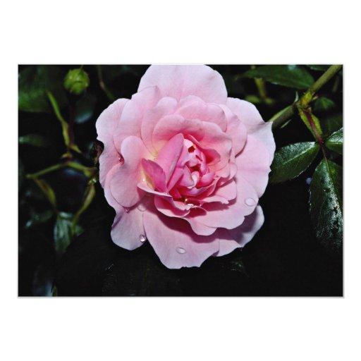 """Shrub Rose 'Golden Wings' White flowers 5"""" X 7"""" Invitation Card"""