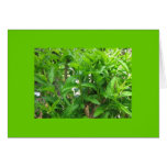 Shrubbery Greeting Card