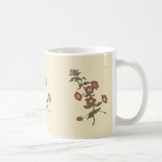 Shrubby Pimpernel Botanical Illustration Coffee Mug