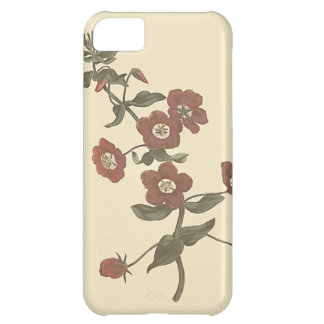 Shrubby Pimpernel Botanical Illustration Cover For iPhone 5C
