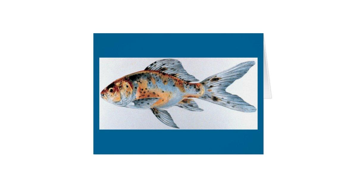 Shubunkin goldfish | Zazzle.com