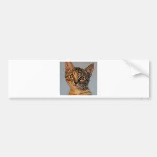 Shulla Bumper Sticker