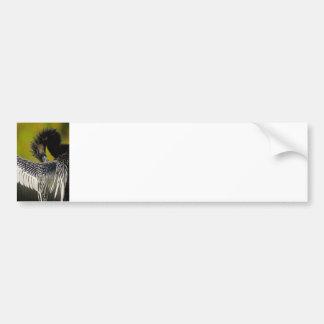 Shy Anhinga Bumper Sticker