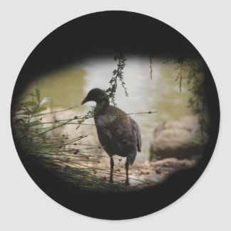 Shy Bird Classic Round Sticker