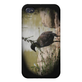 Shy Bird iPhone 4 Cover